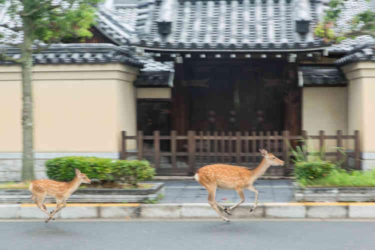 Une biche et son faon, à Nara.