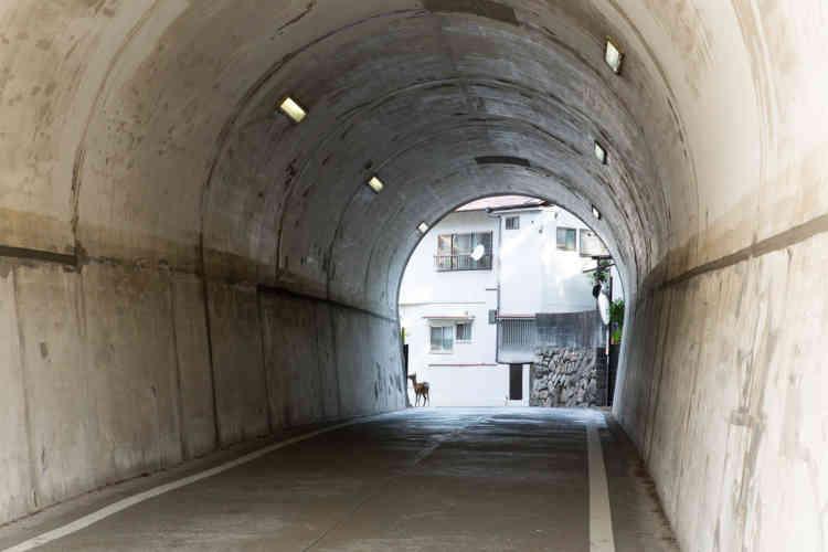 Dans l'île de Miyajima.