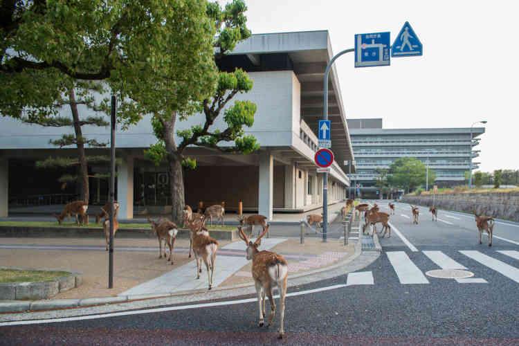 Près de l'immeuble de bureaux de la préfecture de Nara.