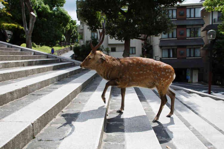 Dans le centre-ville de Nara.