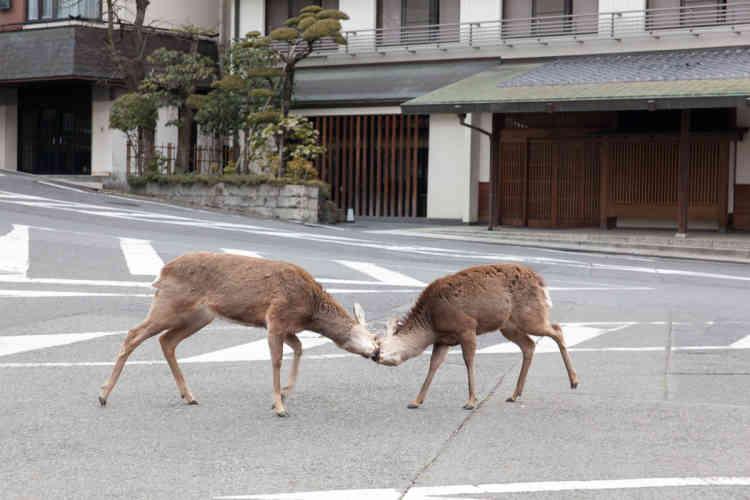 Au petit matin dans les rues du centre-ville de Nara.