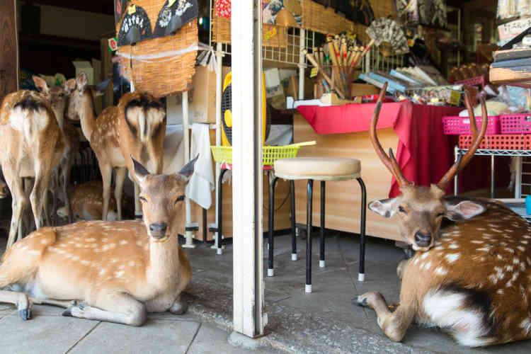 Dans une boutique du centre-ville de Nara.