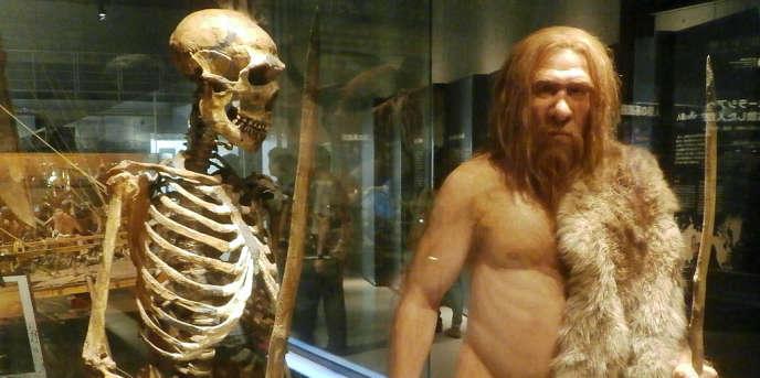 Le squelette d'un homme de Néandertal et sa modélisation au musée des Sciences naturelles de Tokyo.