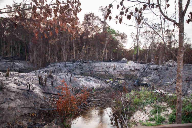 La déforestation par brûlis touche  presque tout le parc national du Phnom Kulen.
