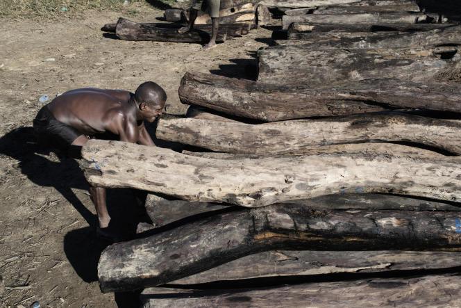 Mai 2014 : sur une rive de la rivière Iagnobé, près du village d'Andanalavahil, un homme déplace pour la pesée un tronc de bois de rose coupé illégalement dans le parc national de Masoala, au nord de Madagascar.