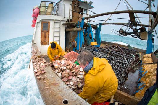 Pêcheurs de Saint-Jacques, au large de Paimpol
