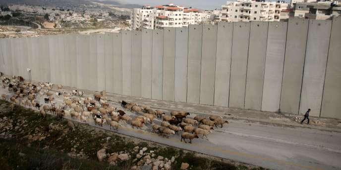Un berger palestinien passe avec son troupeau le long du mur qui sépare le camp de réfugiés palestiniens de Shu'fat et la colonie israélienne de Pisgat Ze'ev, à Jérusalem-Est, le 15 janvier 2016.