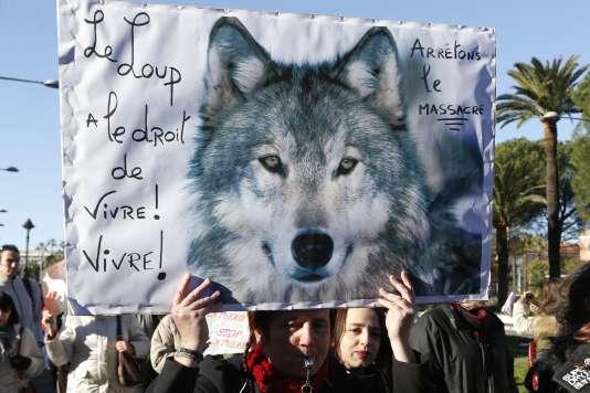 Manifestation contre l'abattage de loups le 17 janvier.