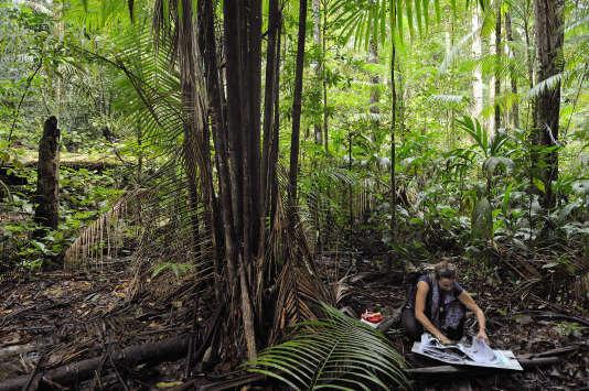 Dans le massif du Mitaraka (Guyane), Sophie Gonzalez, conservatrice de l'herbier IRD de Guyane (UMR AMAP), en train d'échantillonner dans un des bas-fonds du layon B. Mars 2015.