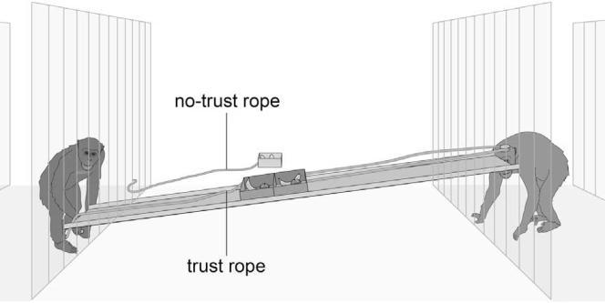 Schéma expliquant le dispositif expérimental du