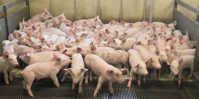La dernière cotation du porc, le 18 janvier, au marché au cadran de Plérin, qui fixe le prix de référence au plan national, s'est établie à 1,08euro/kg. Pour équilibrer leurs comptes et espérer se rémunérer, les éleveurs auraient besoin d'un prix minimal de 1,40euros/kg.