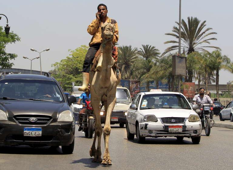 Un homme, sur un chameau, converse sur son téléphone mobile au milieu des embouteillages au Caire, en mai 2015.