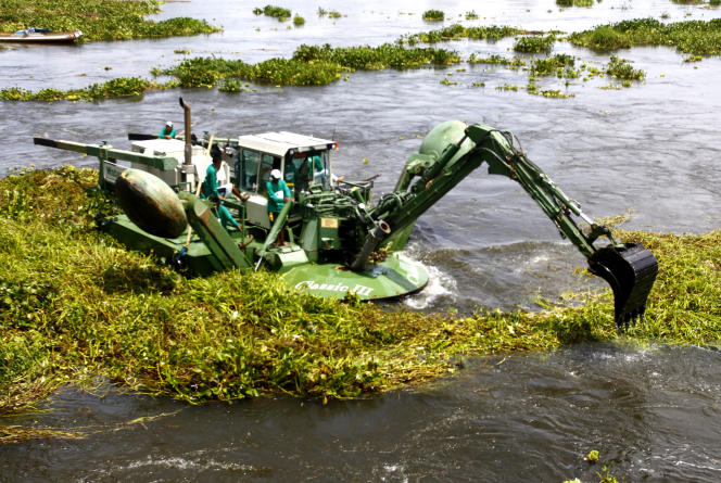 Au Philippines, comme au Bénin et dans de nombreux pays du monde, la jacinthe d'eau s'est développée au point d'asphyxier totalement de nombreuses étendues d'eau. Ici sur le fleuve Rio Grande de l'île de Mindanao.