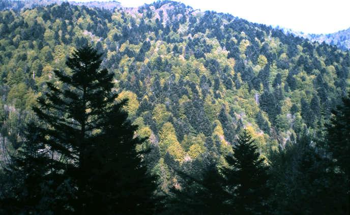Peuplement mêlé de conifères et de feuillus en été, en Alsace
