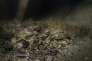 """Lors de la découverte, par des archéologues sous-marins, d'un lot de piastres en argent dans l'épave de la """"Jeanne-Elisabeth""""."""