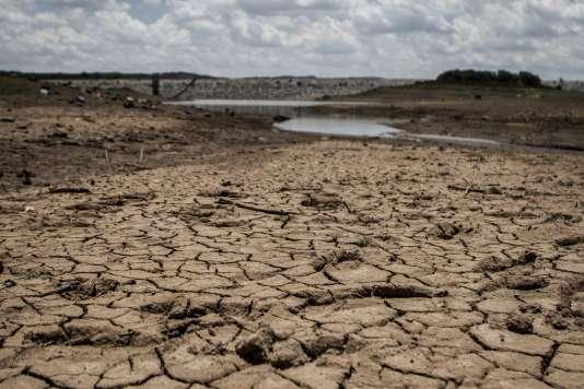 Le Zimbabwe est particulièrement touché par la sécheresse. Ici, le 7 février dans le sud du pays.