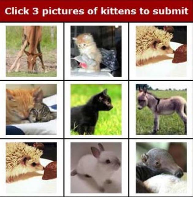 Pour passer le Captcha KittenAuth, il faut cliquer sur trois images représentant un chat.