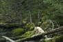 La forêt humide du Grand-Ours, au Canada, dans la province de Colombie-Britannique.