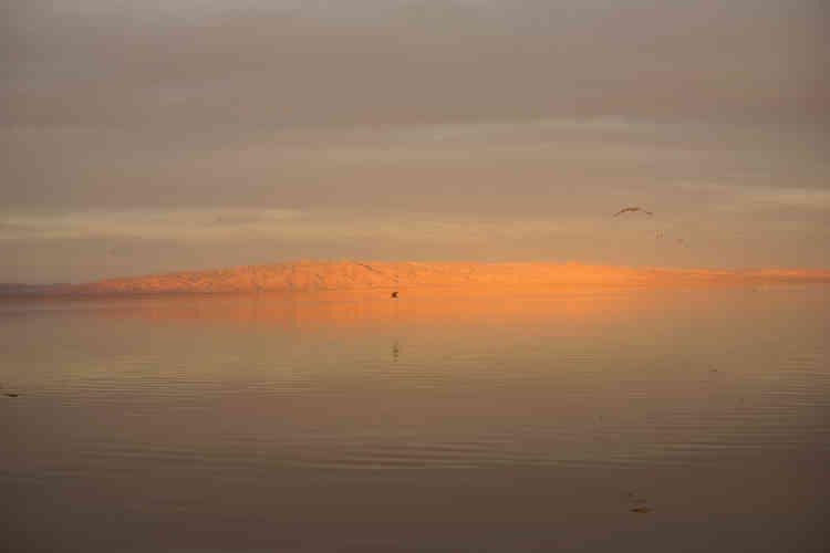 Toutes les photos de Torbjørn Rødland ont été mises en scène au Sonny Bono Salton Sea Wildlife Refuge, un sanctuaire pour les animaux sauvages situé au sud du lac.