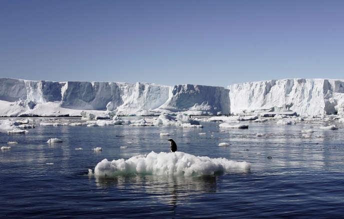 Un manchot empereur, près de la station polaire française Dumont d'Urville, dans l'est de l'Antarctique, en janvier 2010.