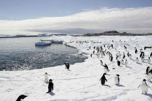 Des manchots, en Antarctique.