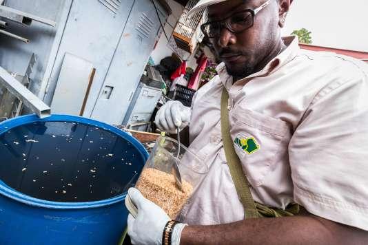 A Cayenne, en Guyane, un membre des équipes de démoustication détruit des larves lors d'une opération contre le virus Zika,  le 19 février 2016.