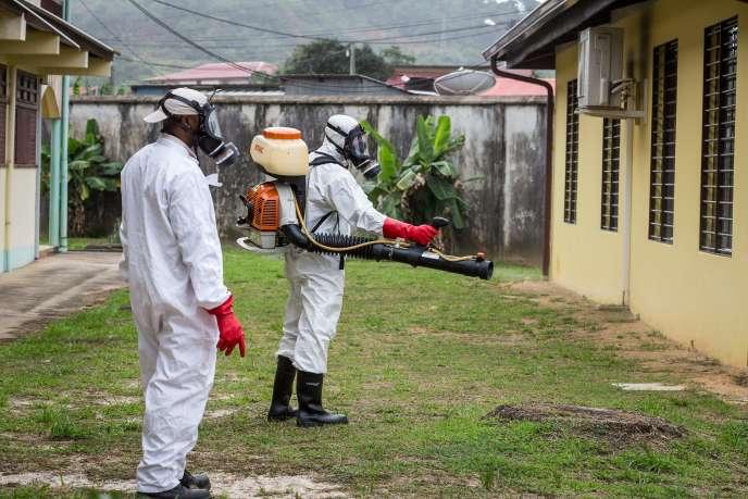 Destruction de larves de moustiques à Cayenne (Guyane), le 19 février.