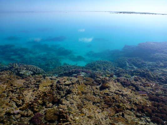 La Grande barrière de corail, en Australie.