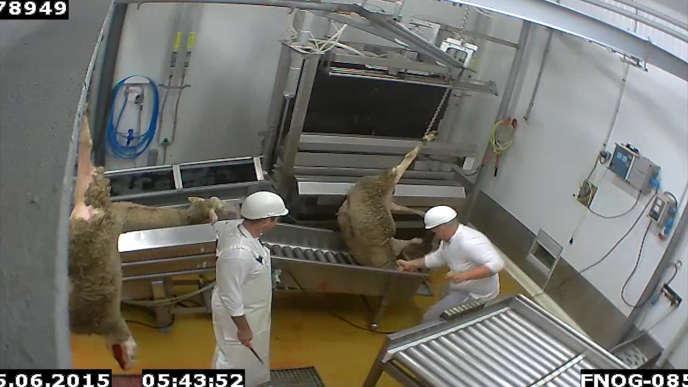 Extrait de la vidéo de L214 dans l'abattoir du Vigan (Gard) en février 2016/ .