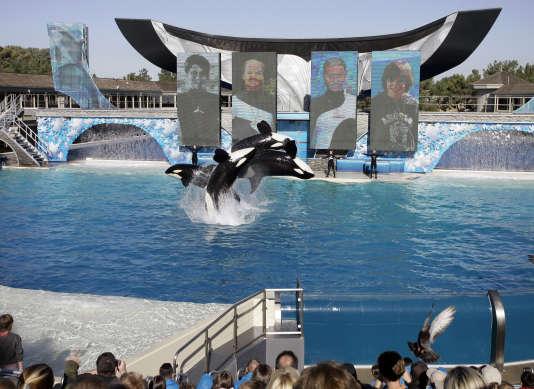 Spectacle d'orques au parc Seaworld de San Diego, en 2006.