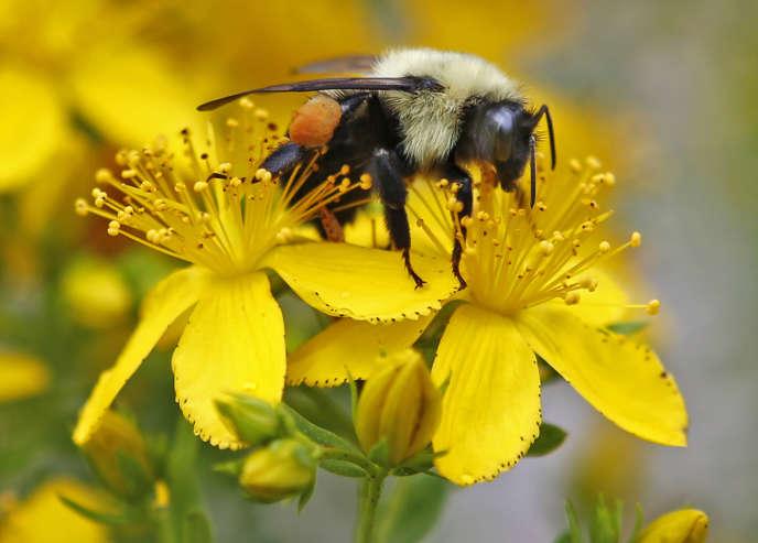 Le déclin des abeilles, des papillons ou des oiseaux menace une partie de la production agricole mondiale, préviennent des scientifiques chargés par l'ONU d'évaluer le recul de la biodiversité.