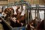 ferme laitiËre