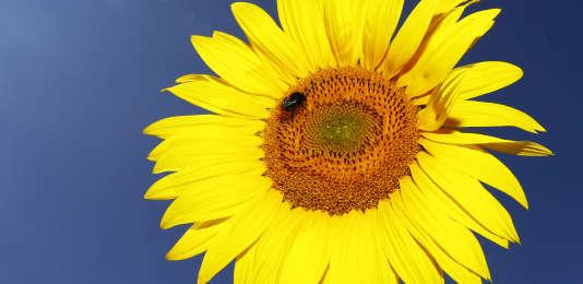 En Europe, 37 % des espèces d'abeilles sont déjà en déclin.