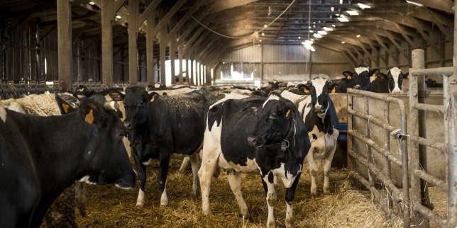 Agriculture: Bruxelles accepte un retour temporaire à une forme de régulation du marché laitier