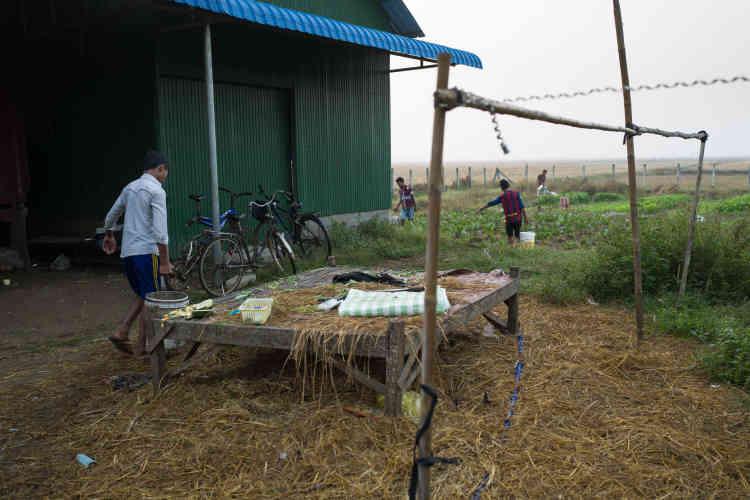 En dehors des heures de cours et d'étude, les jeunes du foyer de Chamlak cultivent un jardin, qui permet de diminuer les frais de nourriture mais aussi de les initier à l'agriculture organique.