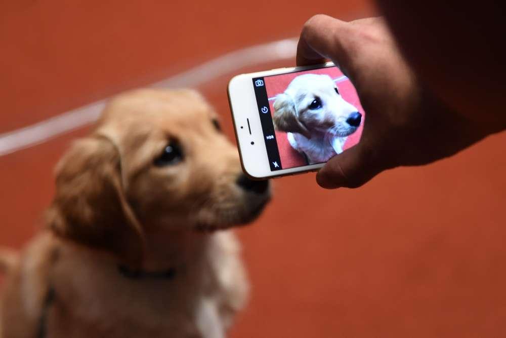 """""""C'est souvent assez touchant d'observer les rapports entre les chiens et leurs maîtres"""", constate le photographe. """"Tout particulièrement pendant les épreuves du concours. Ils semblent tellement connectés l'un à l'autre…"""""""