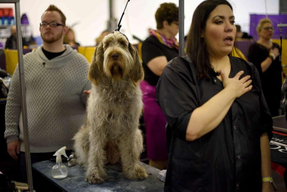 """""""Quand j'ai commencé à travailler pour l'AFP en 1990, on ne couvrait jamais le Dog Show"""", raconte le photographe. """"Comme cette exposition canine attirait toujours de façon incroyable l'attention dans la ville, j'ai proposé un reportage."""""""