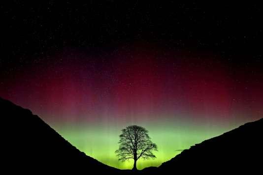 Une aurore boréale brille sur le Sycamore Gap, à Northumberland, comté du nord de l'Angleterre, le 7mars 2016.