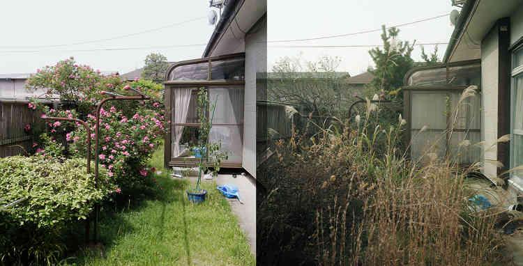 Juin 2011/Novembre 2015 – Le jardin de la maison de mes parents.
