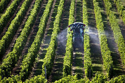 Traitement phytosanitaire d'un vignoble en Gironde.