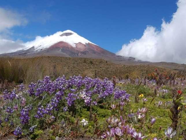 Le volcan Cotopaxi, au cœur du parc national du même nom.