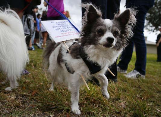 """""""J'ai une meilleure expérience en politique étrangère que Donald Trump"""", est-il inscrit sur un écriteau porté par un chien, aux abords d'un meeting du milliardaire américain, à Boca Raton (Floride), le 13 mars."""
