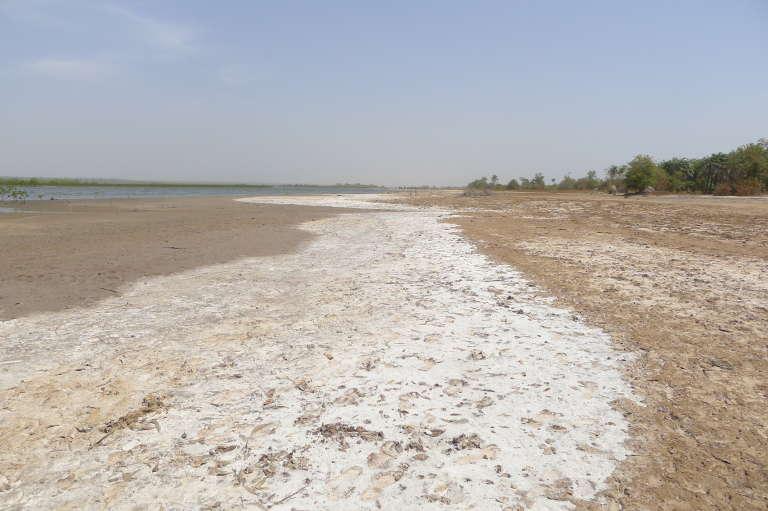 Le long du fleuve Gambie, les remontées de sel provoquent la disparition des rizières.