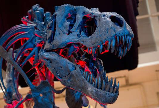 """Squelette d'un Tyrannosaurus Rex présenté lors de l'exposition """"Fossil World"""" en 2014 à Münich."""
