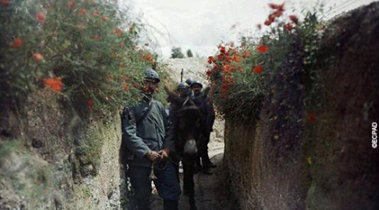 Un fugace moment de paix dans la tourmente de la Grande Guerre. Un cliché tiré des archives photographiques de l'ECPAD.