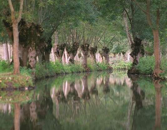 Vue prise le 17 octobre 2001 d'une conche du marais Poitevin, deuxième zone humide de France aux confins des deux régions du littoral atlantique (Pays de la Loire et Poitou-Charentes).