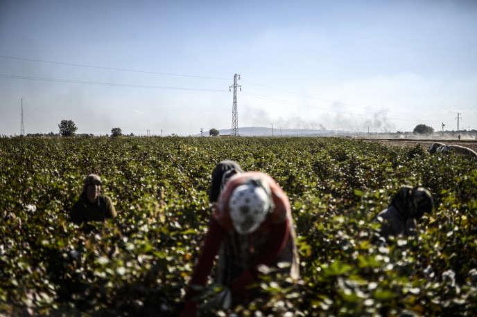 Dans un champ en Turquie, en octobre2014, où travaillent des femmes kurdes syriennes. Au loin, de la fumée monte de Kobané.