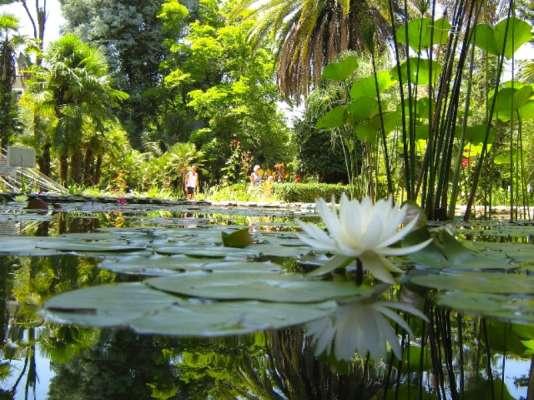 Jardin botanique de Sukhum, en Abkhazie.