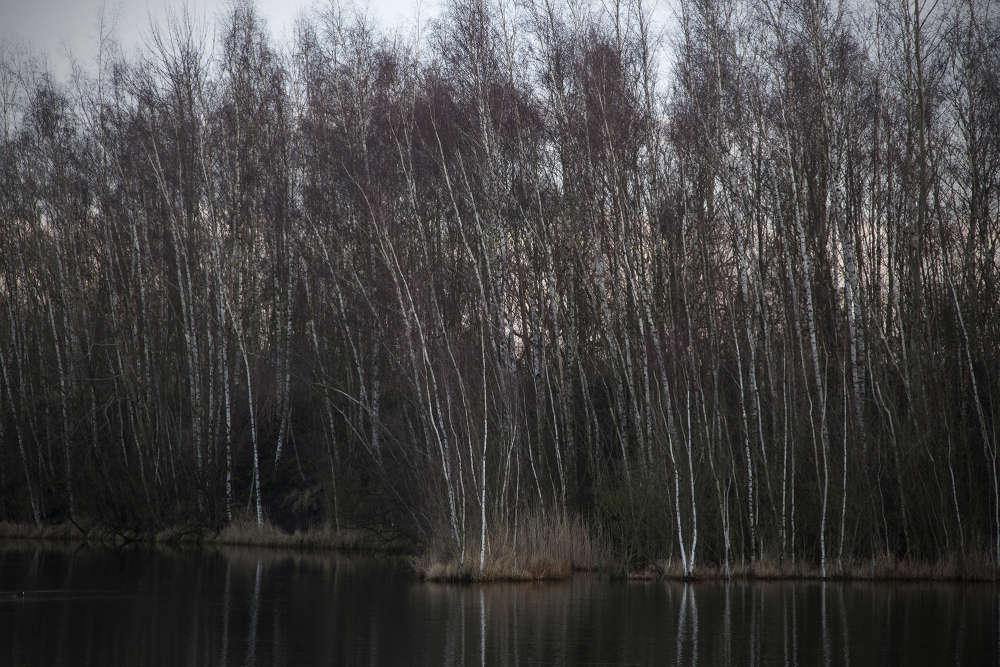 Peu de choses sont dues à la nature sur le terril des Argales, le plus étendu de la région avec 140 hectares, mais depuis vingt ans tout a été pensé pour que s'ydéveloppe une biodiversité foisonnante.