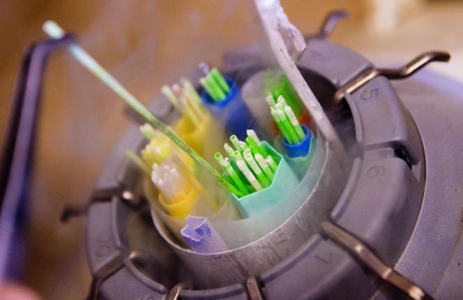 Des échantillons de sperme bovin dans du liquide nitrogène, le 31 janvier 2013.